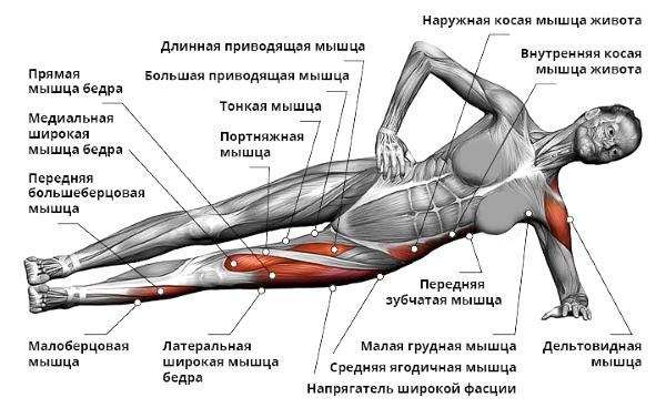 """Работа мышц при упражнении """"Планка"""""""